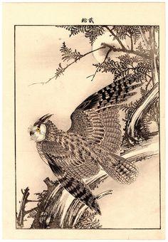 Lotto 00771 N.1 xilografia ukiyo-e Imao Keinen CIPRESSO E GUFO REALE Anno: 1892 Condizioni: buone Dimensioni: 25 x 36,5 cm Japanese Art Prints, Japanese Tattoo Art, Japanese Painting, Tattoo Posters, Japanese Bird, Oriental, Bird Drawings, Owl Art, Linocut Prints
