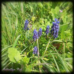 Spring is back