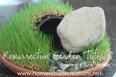 How to Make a Resurrection Garden using Wheat Grass from Homeschool Creations holiday, resurrect garden, garden tutori