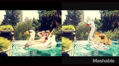 DOUG-THE-PUG-taylor-swift in the pool ----- P.S. click on the image to check out our Funny Pugs T-shirt today! All sizes available in different colors.