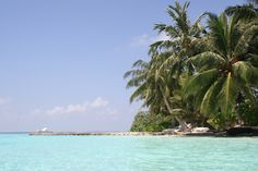 Maledives -Bandos Island - Beautiful island with white beach, palms and blue, warm water.