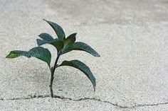plants growing through cracks