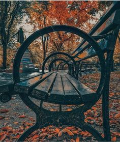 Autumn in Central Park - NYC