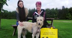 Dog dumped and tied to tree with broken leg finds perfect forever home - Dogs Trust