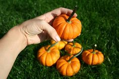 Dýně Pumpkin, Vegetables, Food, Pumpkins, Essen, Vegetable Recipes, Meals, Squash, Yemek