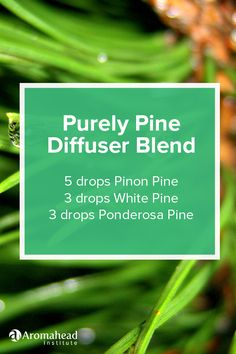 It's like I'm walking in a forest whenever I use this pinon pine, white pine and ponderosa pine diffuser blend! I love tree scents, like the blends in this blog post: http://www.aromahead.com/blog/2016/01/18/conifer-oil-extravaganza-black-spruce-body-oil-recipe/