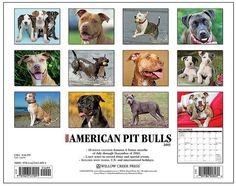Just American Pit Bull Terriers 2015 Calendar