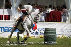 Lusitano - Working Equitation Competition - speed test — in Lisboa, Portugal.