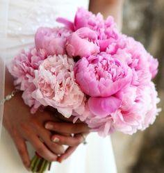 Η παιώνια είναι φυλλοβόλος θάμνος όπου τον Απρίλιο δημιουργεί τα όμορφα λουλούδια της.