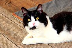 Photo chat noir et blanc