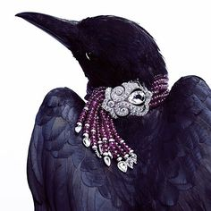 The Lucky Crow Cartier Bracelet.