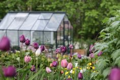 Greenhouse in Spring time. Spring Time, Tulips, Outdoor, Outdoors, Outdoor Games, The Great Outdoors, Tulip