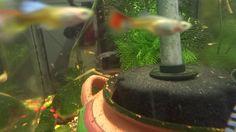 Quick look at the FRY aquarium