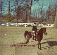 Elvis riding Bear at Graceland, 1968                                                                                                                                                     More