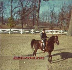 Elvis riding Bear at Graceland, 1968
