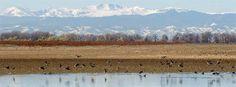 Colorado Parks and Wildlife - Barr Lake