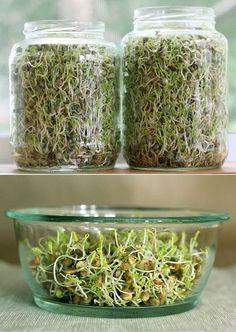 Проращиваем семена