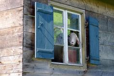 Good Morning - Guten Morgen  Beim Wandern durch Wildsteig entdeckt _______________________________  #heimatkunde  #deinbayern #visitbavaria #bavariagermany #igersbavaria #country_features #rural_love #ig_countryside #transfer_visions #renatedodell #wildsteig #fotocatchers  #amazingphotohunter #ig_exquisite #worldprime #princely_shotz #heart_imprint  #everything_imaginable_ #bestcaptureglobal #ig_myshot #igpowerclub  #natureprimeshot #antennebayern #main_vision #sheep #windowshotwednesday…