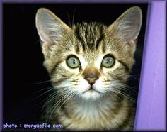 cat cat cat lovely cat