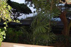 Kaanapali Condo For Sale: Kaanapali Plantation Unit 30, Maui, Hawaii