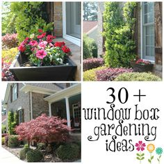 DIY:: Love Windowboxes ! And these are Beautiful ones ! #30 + Window boxes & Great Gardening Ideas ! by @Deb Depew's