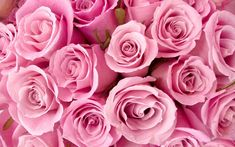 Image detail for -Description: Free download Special Pink Roses wallpaper/desktop ...