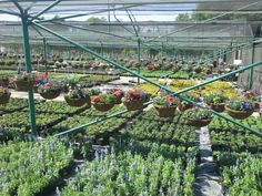 Plants galore Hanging Baskets, Nurseries, Plants, Fall Hanging Baskets, Babies Rooms, Child Room, Plant, Babies Nursery, Kids Rooms