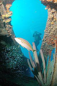 Bonaire, NA  Hilma Hooker Wreck Dive  Done it, nice dive!