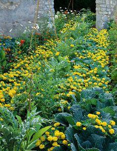 Vegetable Garden, Hydrangea, Home And Garden, Gardening, Flowers, Plants, Gardens, Vegetables Garden, Lawn And Garden