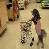 Dog Goes Shopping! (The Shopping Dog) (Short version)