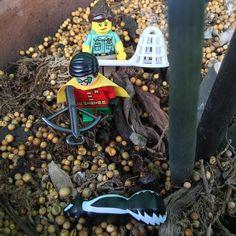 I'll take care of your vermin ma'am #RobinBeingDick . . . . . .  #brickculture #minifigallstars #brickcentral #lego #afol #toyelites #bricknetwork #brickleague #toyhumor #toyslagram_lego #minifigures #jj_lego #toycrewbuddieslego #vitruvianbrix #toys4life #toysaremydrug #justanothertoygroup #brick_vision #legophotography #toptoyphotos #toyrevolution #legosuperheroes by minifig_all_stars