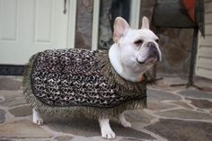 Custom Order Cool Coat for Your Dog French by BlissfulDogBoutique, $69.00