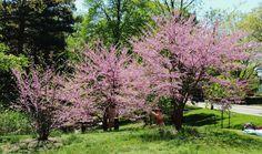 Spring scenery.