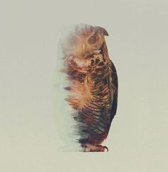 Incredible double exposure photography shows animals in their natural habitat (22 Photos)