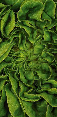 GREEN Abstract / Pat