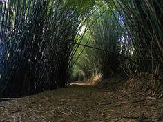 Zoom Gallery: Bambu