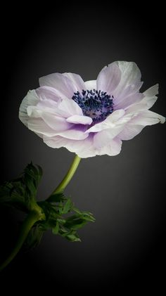 Anemone by Maurice Loy on 500px