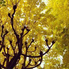 Syksy Pariisissa #paris #pariisi #matkalla #park #puisto #france #ranska #lokakuu #october #yellow #leafs #nature #luonto