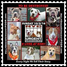 KILL LIST FOR SUNDAY 10-2-16 PLEASE SHARE NOW  TO SAVE A LIFE FROM THE KILLERS @NYCACC