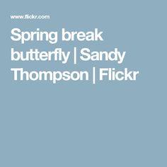 Spring break butterfly   Sandy Thompson   Flickr