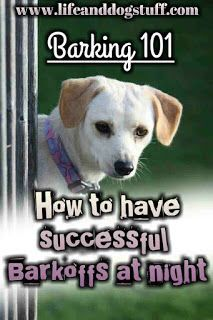 Barking 101 - How to Have Successful Barkoffs at Night. #dogs #dogbarking #funnydogs
