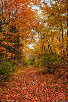 Autumn Leaves on Old Road | Flickr - Photo Sharing!