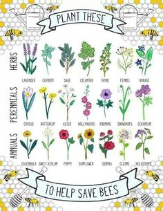 Bees are in danger, which makes us all in danger. Please plant a few of some of these plants bees love to help the cause!
