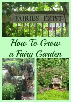 How to grow a fairy garden