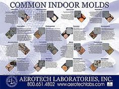 Mold Can Contain Some Of The Most Toxic Substances On Planet In Fact Top 10 Terrorism Chemical Weapons Takes 2 Slots