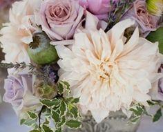 roses & dahlias