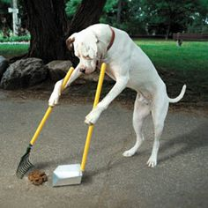 Training a dog is the responsible thing to do for both of you. Training your dog the right way will require you to learn a lot about canine behavior. Here are some advice on how successfully train your dog or find a trainer. Funny Dogs, Funny Animals, Cute Animals, Funny Pitbull, Animals Dog, Funny Fails, Humorous Cats, Cat Fails, Photo Humour