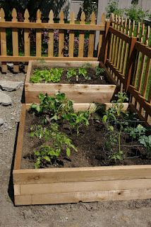 raised beds and picket fencing