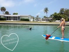 Paddleboard with dolphins in their natural habitat at Stump Pass Beach State Park in Englewood, Florida.
