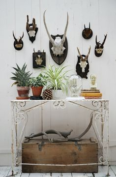 skull antler wall with phrenology head and palmistry hand cheese box and iron table